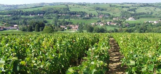 Un Lyonnais et des Bourgognes qui nous redonnent le goût de vivre..!