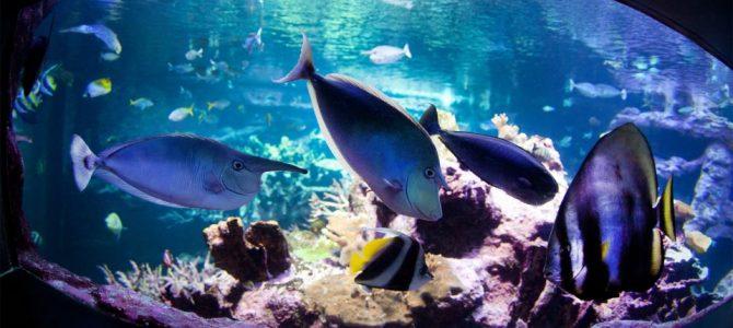 Cherbourg célèbre l'Océan, le dernier territoire sauvage de la planète!