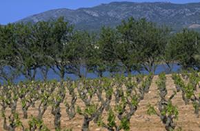 vignoble-languedoc_rocaille