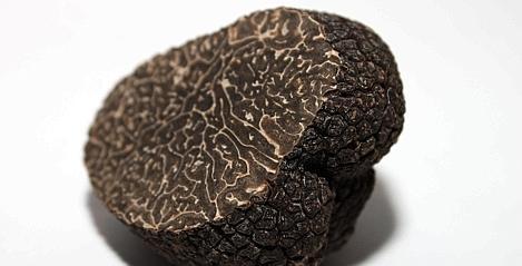 web_truffe-noire--469x239