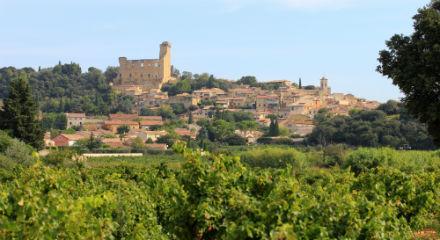 vignes-chateauneuf-du-pape